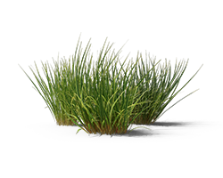 Three patches of grass with a white background.